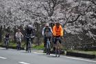 奥琵琶湖 海津大崎の桜 日帰りお花見サイクリング(2010.4.10) - 12