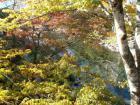 飛騨高山、飛騨古川、郡上八幡めぐりサイクリング(2010.11.6〜7) - 40