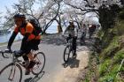 奥琵琶湖 海津大崎の桜 日帰りお花見サイクリング(2010.4.10) - 13