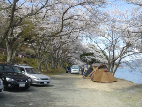 奥琵琶湖 海津大崎の桜 日帰りお花見サイクリング(2010.4.10) - 2