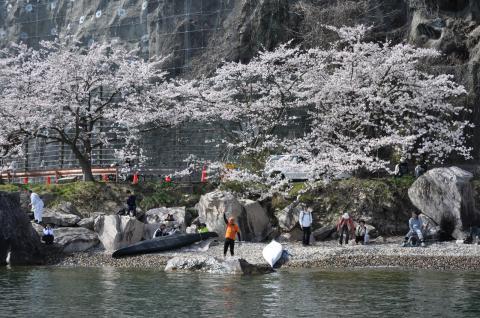 奥琵琶湖 海津大崎の桜 日帰りお花見サイクリング(2010.4.10) - 21