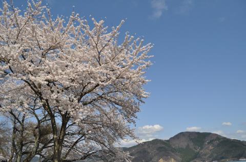奥琵琶湖 海津大崎の桜 日帰りお花見サイクリング(2010.4.10) - 16