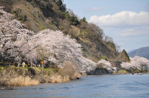 奥琵琶湖 海津大崎の桜 日帰りお花見サイクリング(2010.4.10) - 20